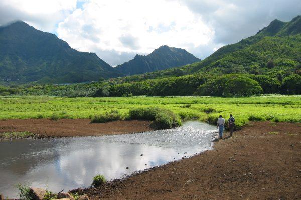 kawainui marsh construction management