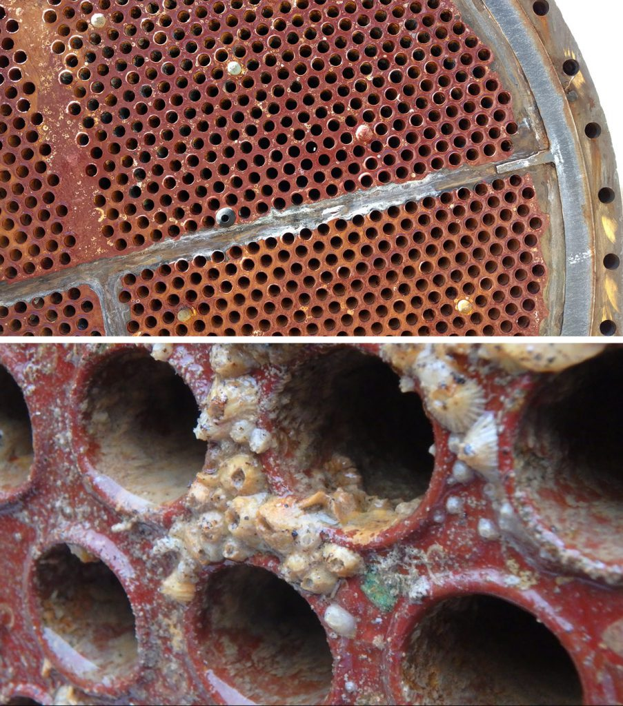 biofouling picture